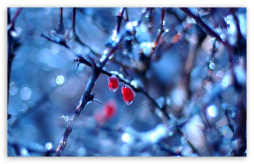 frozen_fruits_1-t2